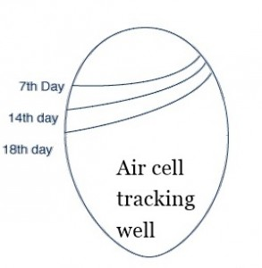 single air_cell2