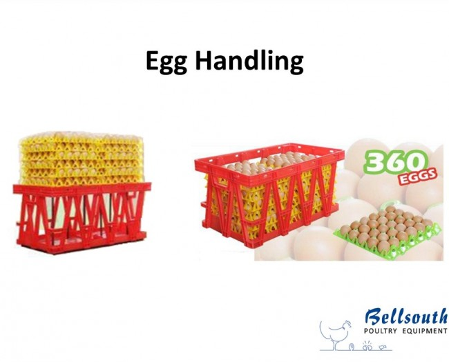 Linda crate with egg trays